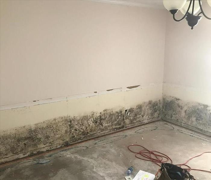 Mold Remediation in Pensacola, FL. Before