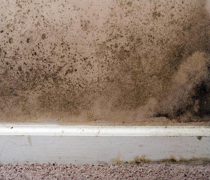 Mold Remediation Removing The Mold In Your Pensacola Home