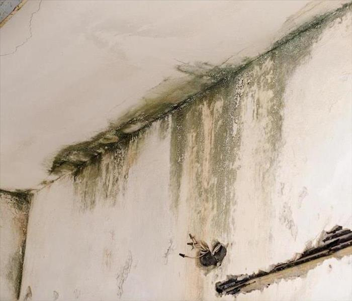 Mold Remediation The Role of Deodorization in Mold Remediation for Your Pensacola Home