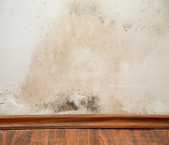 Mold Remediation Ensley Mold Damage - Why Should You Hire a Professional Company to Remove it