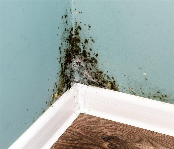 Mold Remediation Reliable Mold Damage Remediation Methods for Perdido Key Residents