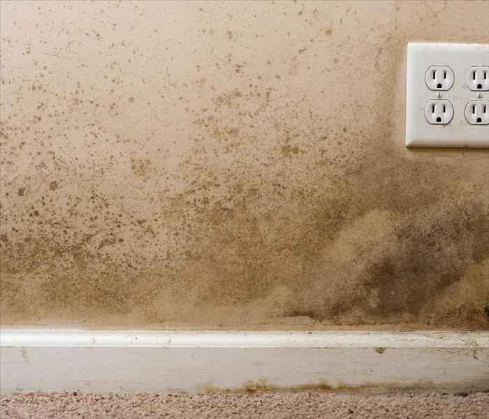 Mold Remediation How do Professionals Get Rid of Mold Damage from Your Goulding Property?
